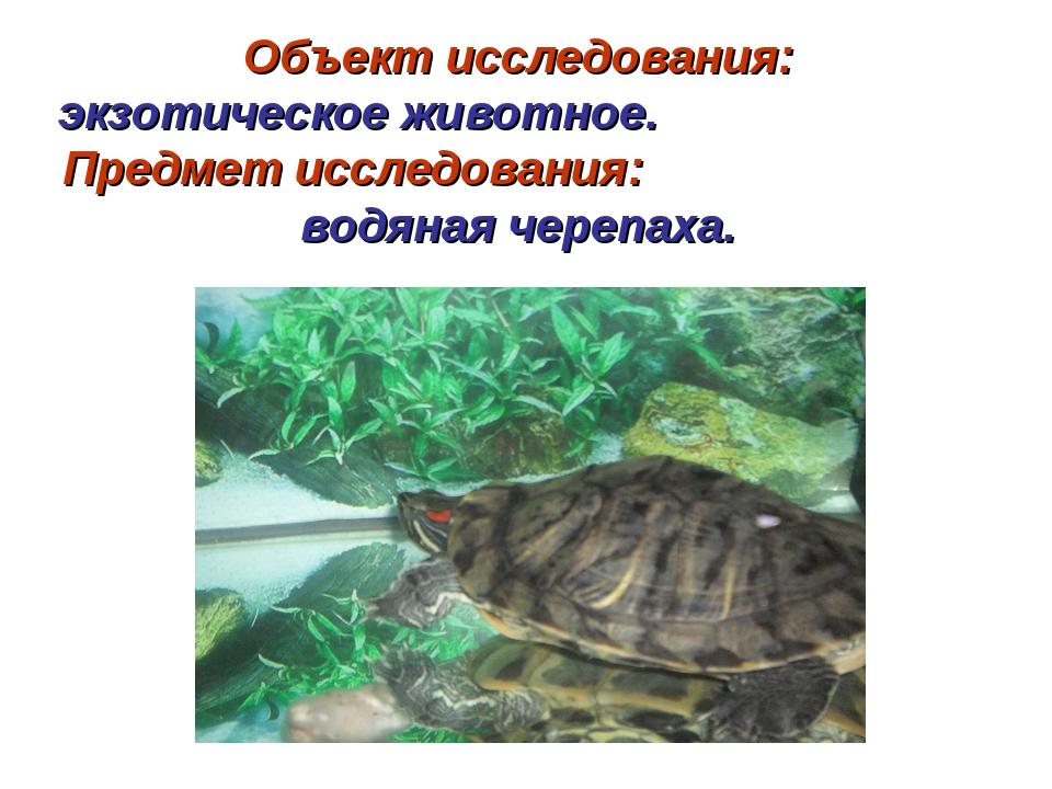 Объект исследования: экзотическое животное. Предмет исследования: водяная чер...