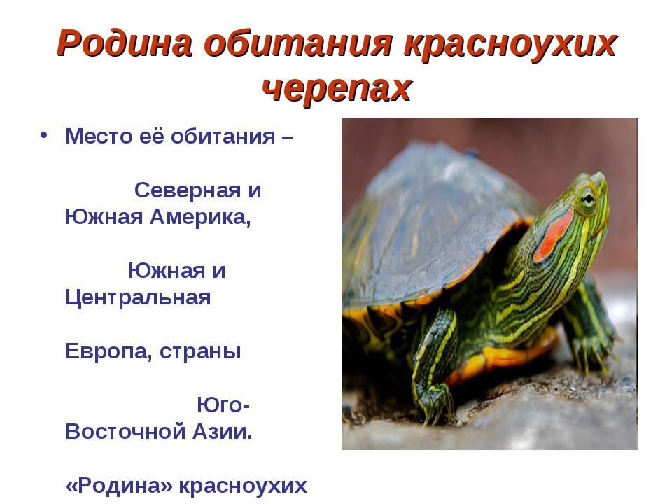Родина обитания красноухих черепах Место её обитания – Северная и Южная Амери...