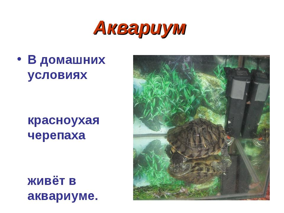 Аквариум В домашних условиях красноухая черепаха живёт в аквариуме. В наш акв...