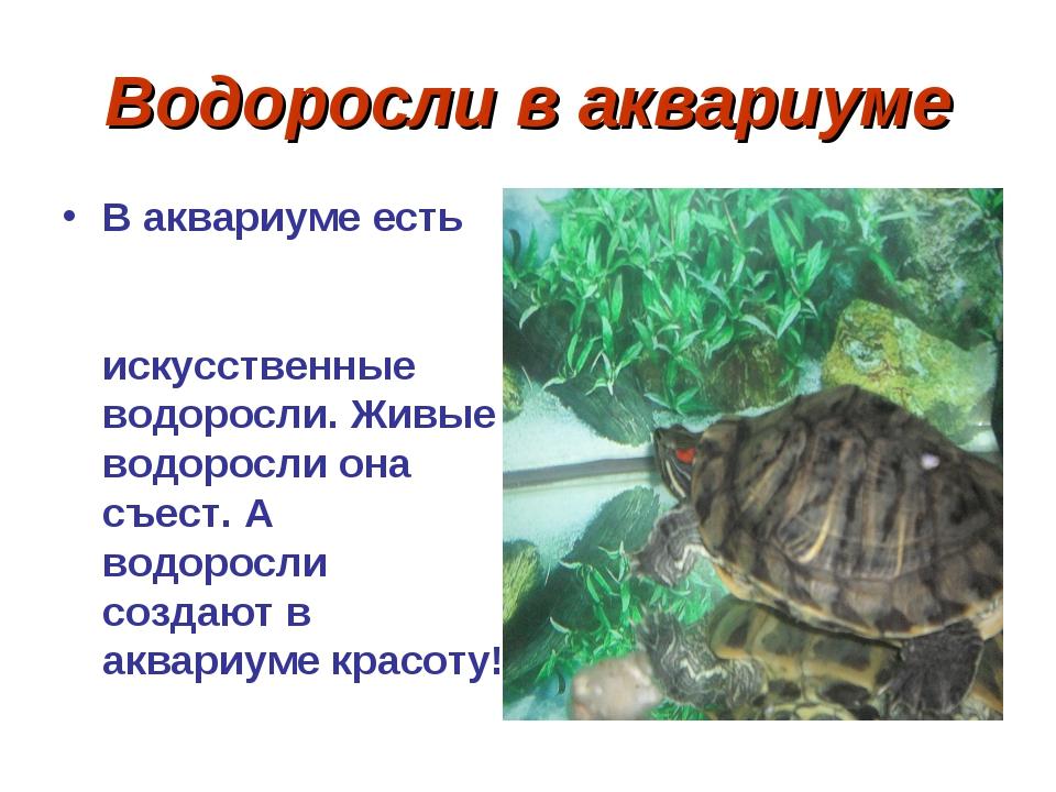 Водоросли в аквариуме В аквариуме есть искусственные водоросли. Живые водорос...
