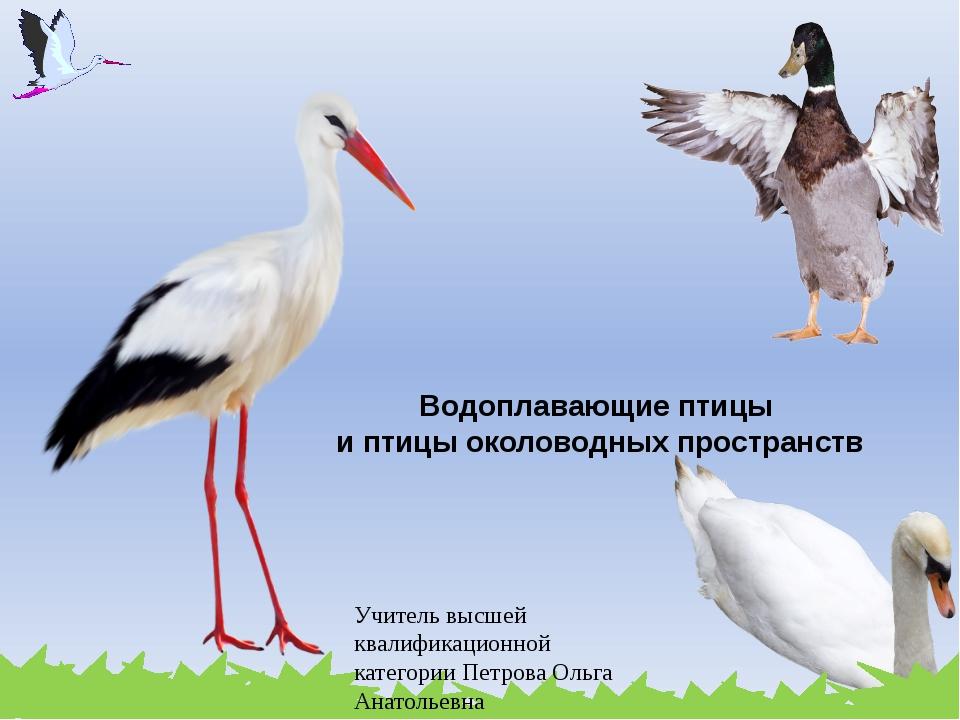 Водоплавающие птицы и птицы околоводных пространств Учитель высшей квалификац...
