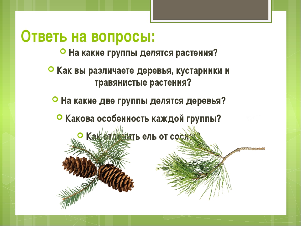 Ответь на вопросы: На какие группы делятся растения? Как вы различаете деревь...