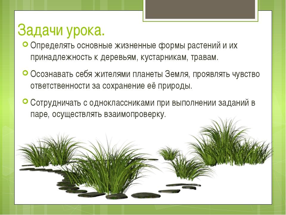 Задачи урока. Определять основные жизненные формы растений и их принадлежност...