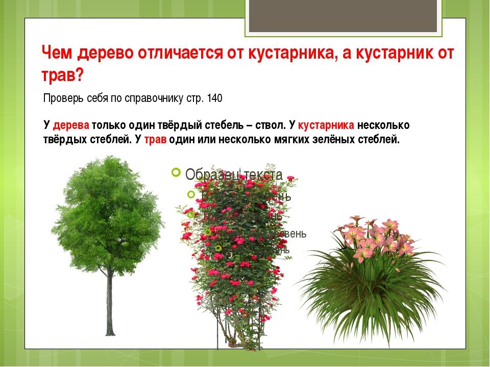 Чем дерево отличается от кустарника, а кустарник от трав? Проверь себя по спр...