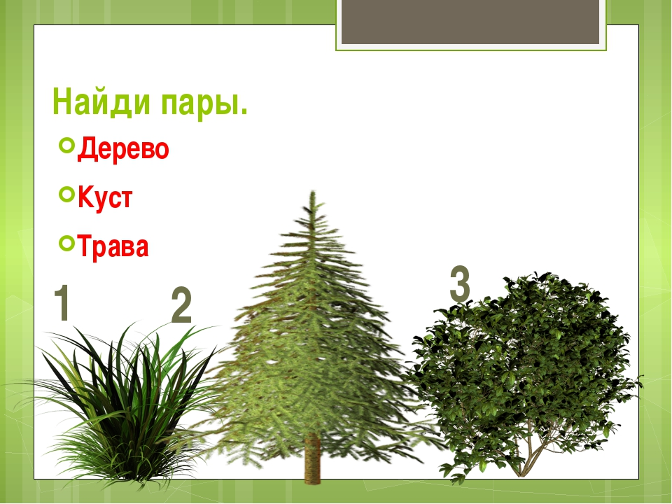 Найди пары. Дерево Куст Трава 1 2 3