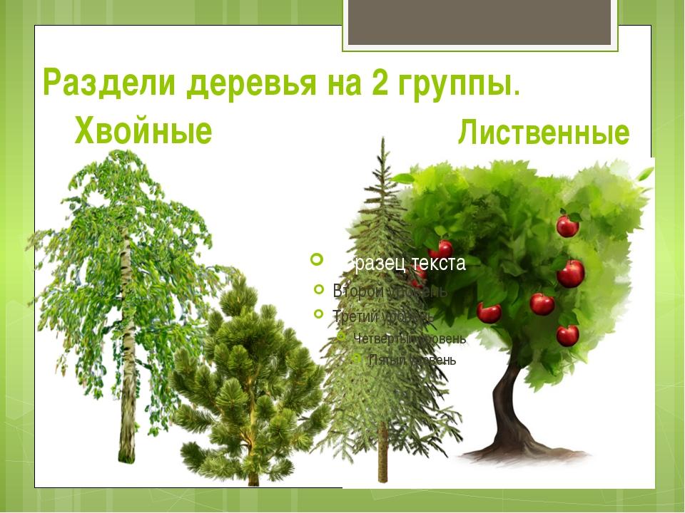 Раздели деревья на 2 группы. Хвойные Лиственные