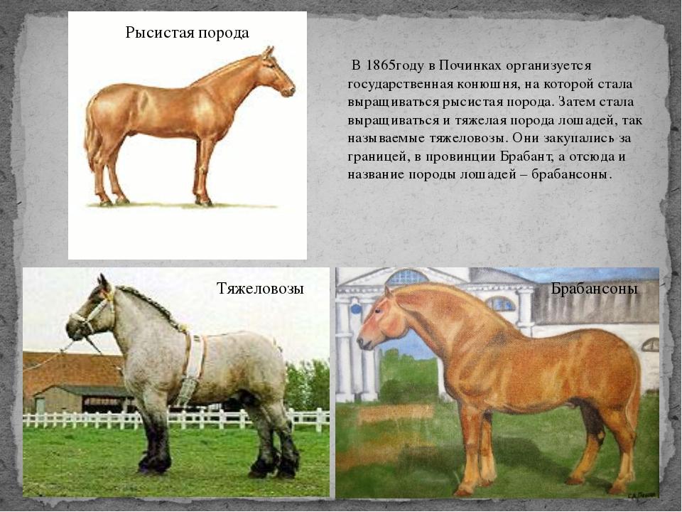 В 1865году в Починках организуется государственная конюшня, на которой стала...