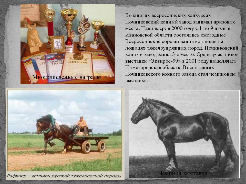 Во многих всероссийских конкурсах Починковский конный завод занимал призовые...