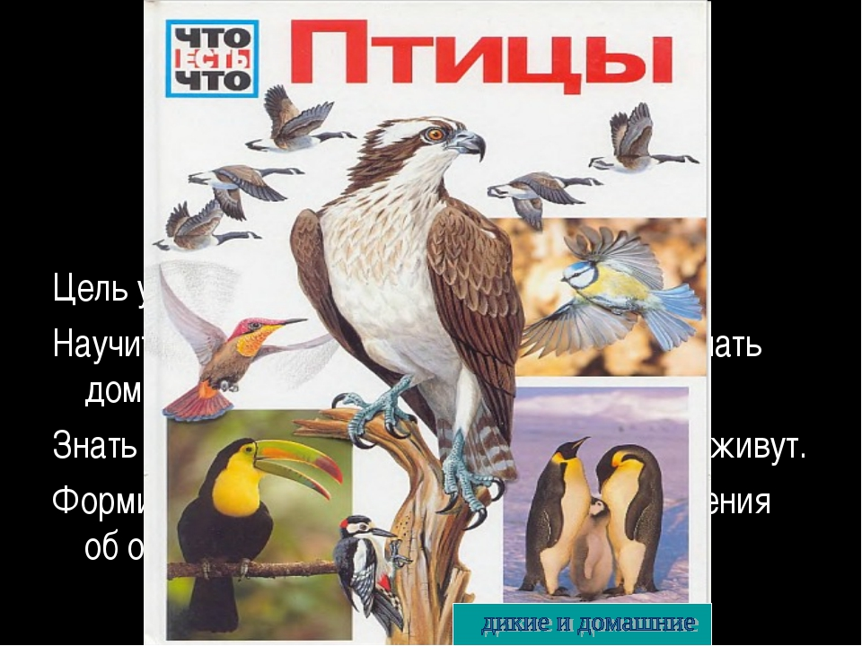 Тема урока: Цель урока: Научиться различать птиц и животных; отличать домашн...