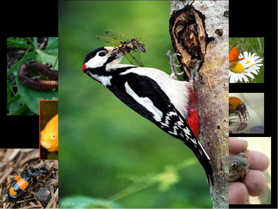 Чем питаются птицы?