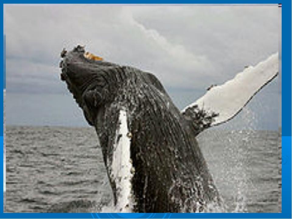 Если кит живет в воде и очертаниями тела похож на рыбу, то почему тогда он не...