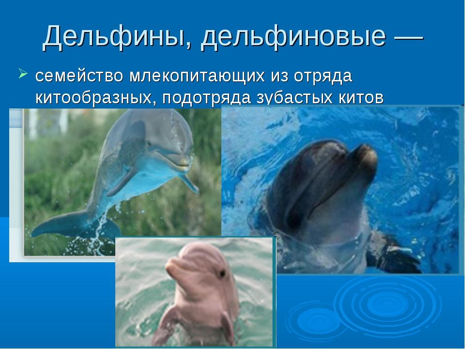 Дельфины, дельфиновые — семейство млекопитающих из отряда китообразных, подот...