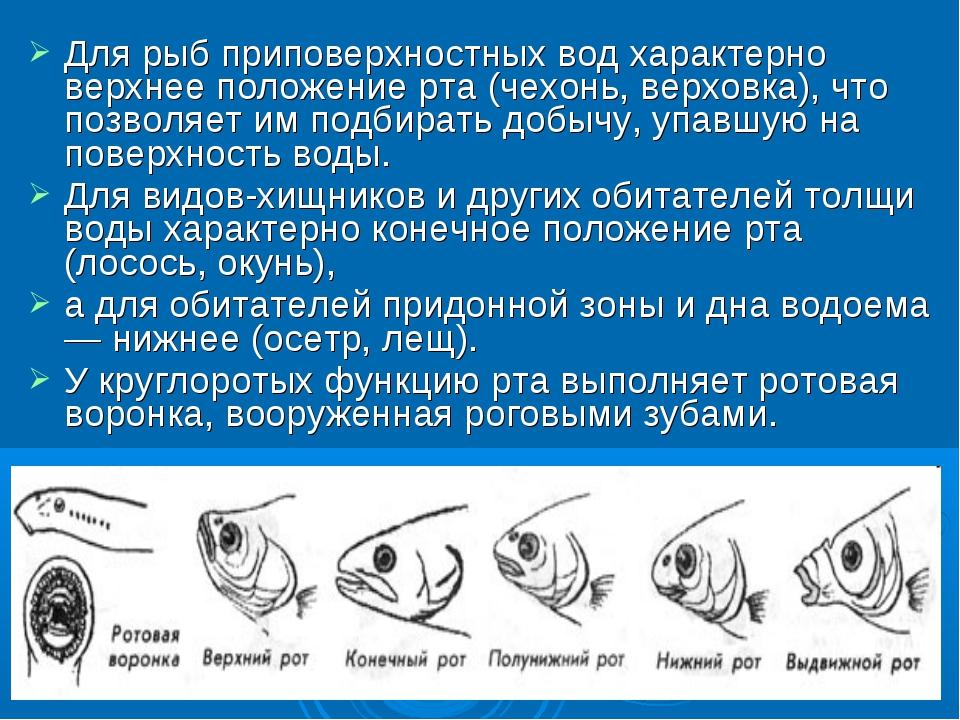 Для рыб приповерхностных вод характерно верхнее положение рта (чехонь, верхов...