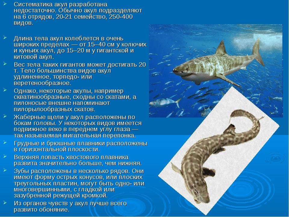 АКУ́ЛЫ Систематика акул разработана недостаточно. Обычно акул подразделяют на...