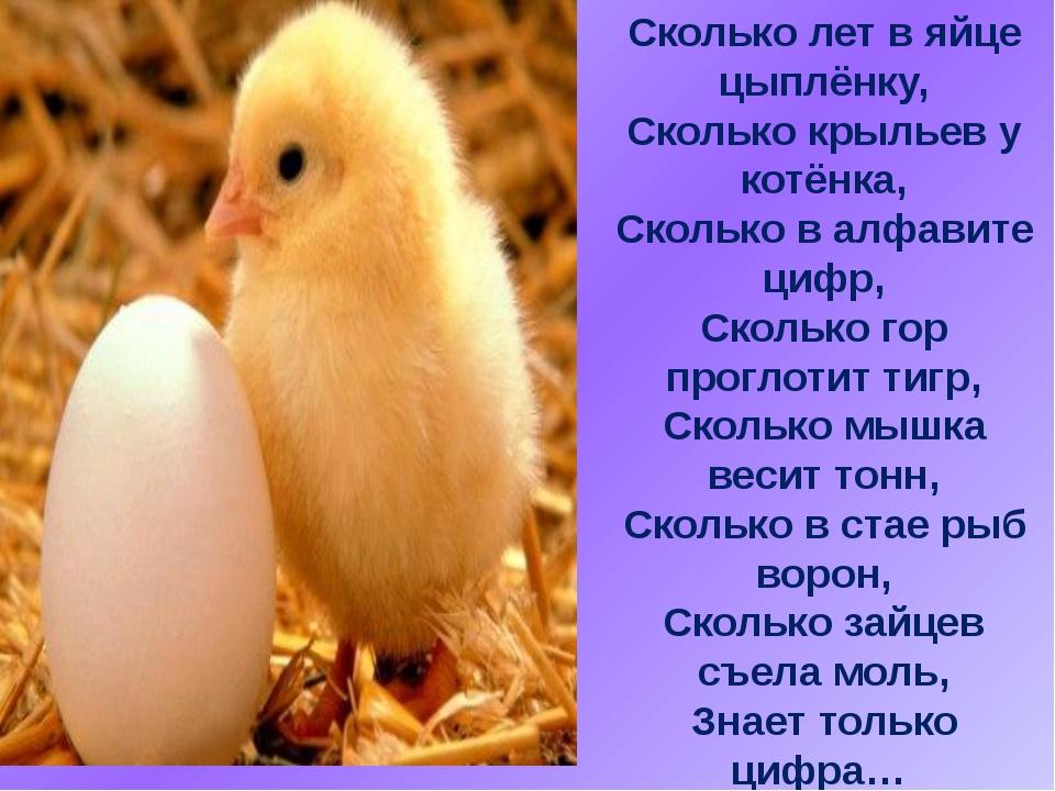 Сколько лет в яйце цыплёнку, Сколько крыльев у котёнка, Сколько в алфавите ци...
