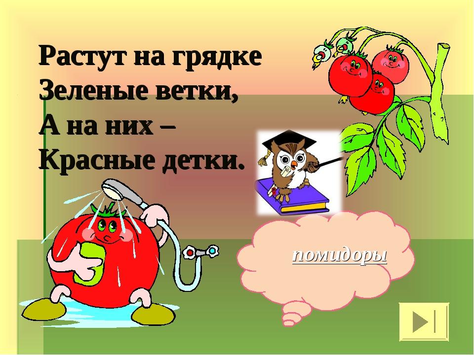 Растут на грядке Зеленые ветки, А на них – Красные детки. помидоры