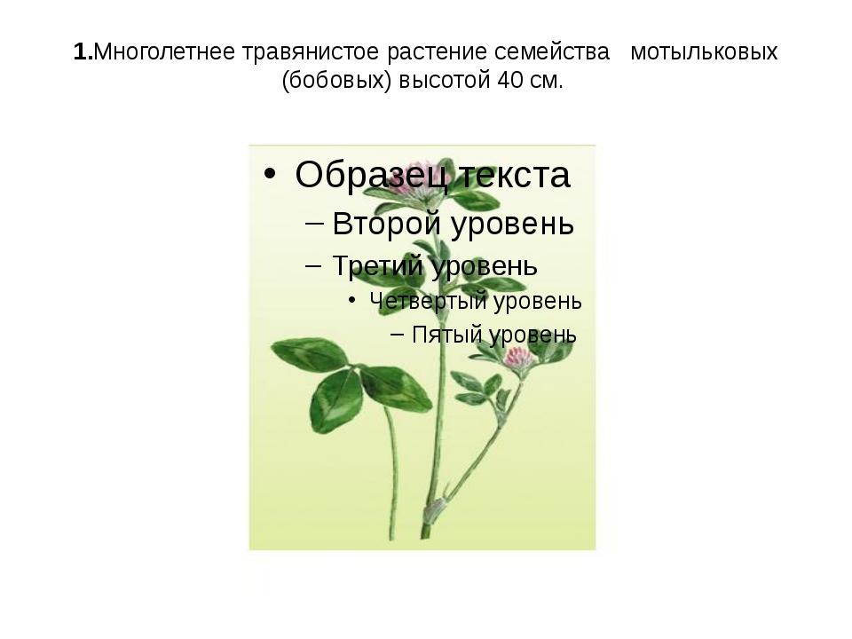 1.Многолетнее травянистое растение семейства мотыльковых (бобовых) высотой 40...