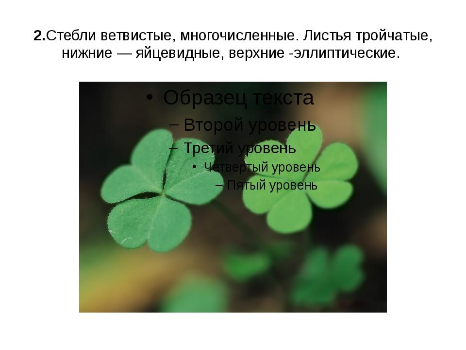 2.Стебли ветвистые, многочисленные. Листья тройчатые, нижние — яйцевидные, ве...