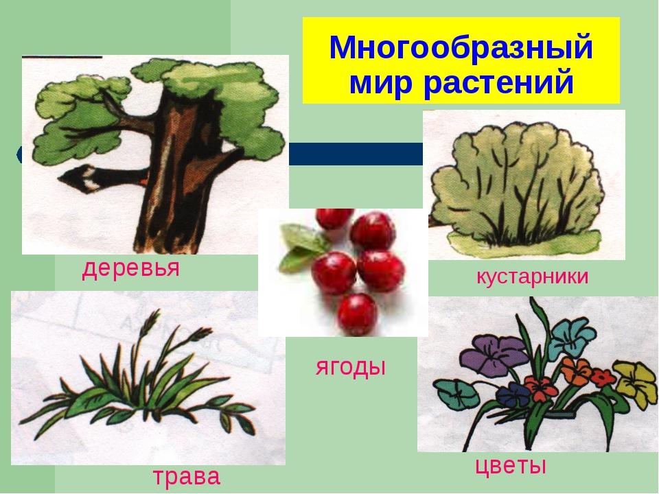 Многообразный мир растений кустарники деревья цветы трава ягоды