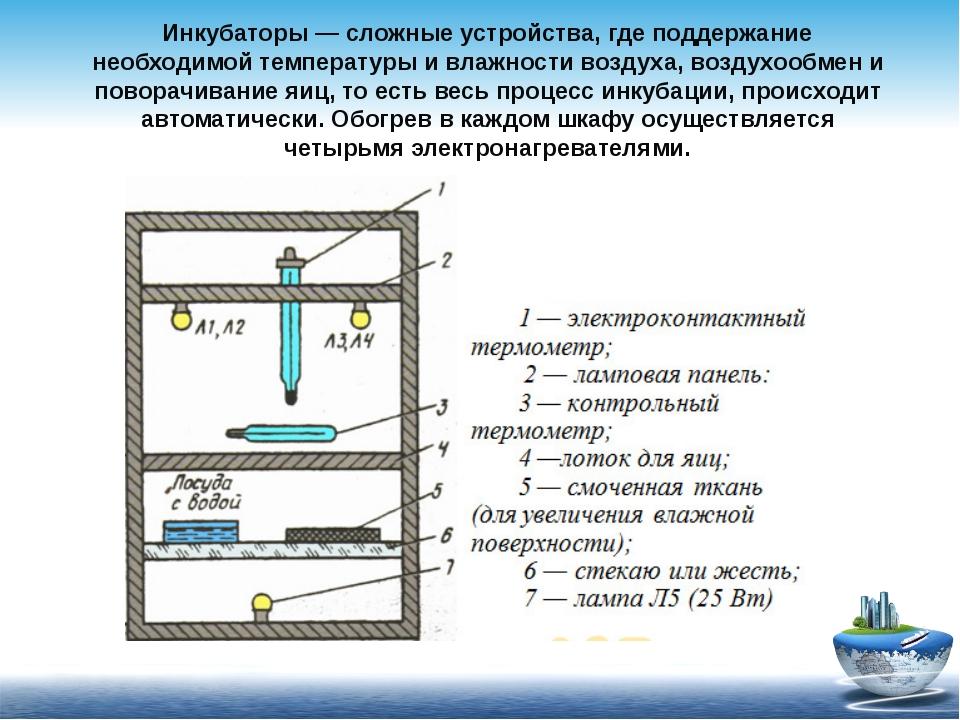Инкубаторы — сложные устройства, где поддержание необходимой температуры и вл...