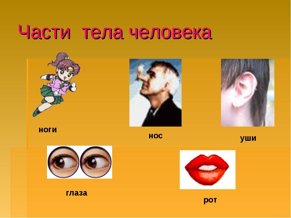 Части тела человека ноги нос уши рот глаза