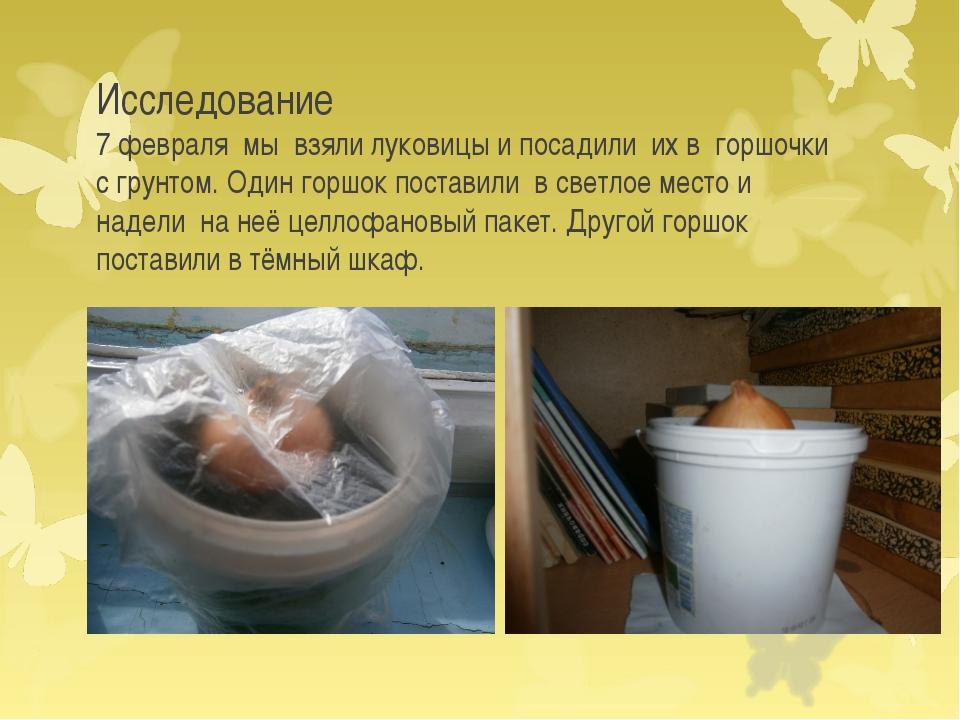 Исследование 7 февраля мы взяли луковицы и посадили их в горшочки с грунтом....