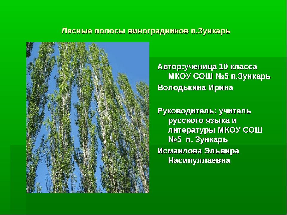 Лесные полосы виноградников п.Зункарь Автор:ученица 10 класса МКОУ СОШ №5 п.З...