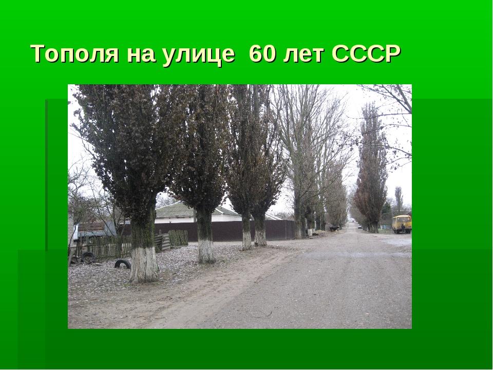 Тополя на улице 60 лет СССР