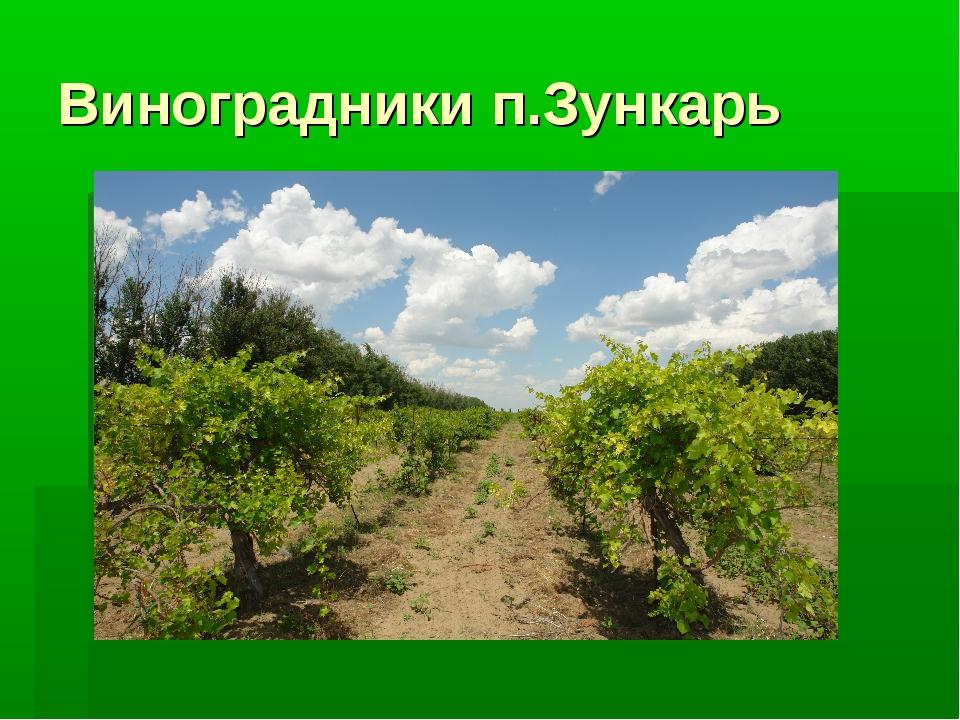 Виноградники п.Зункарь