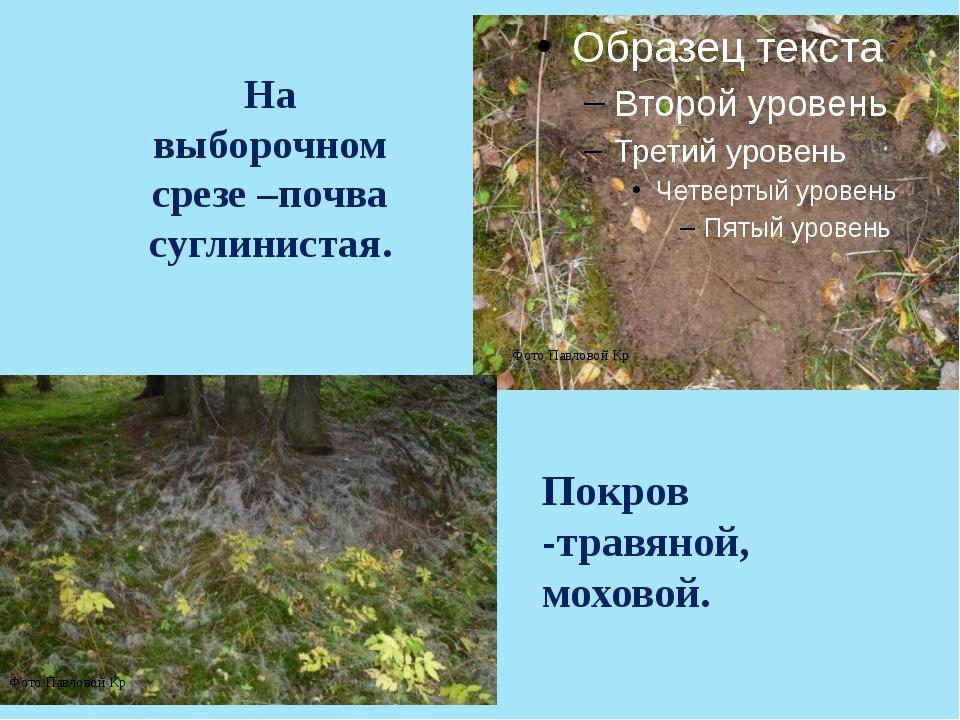 На выборочном срезе –почва суглинистая. Покров -травяной, моховой. Фото Павло...