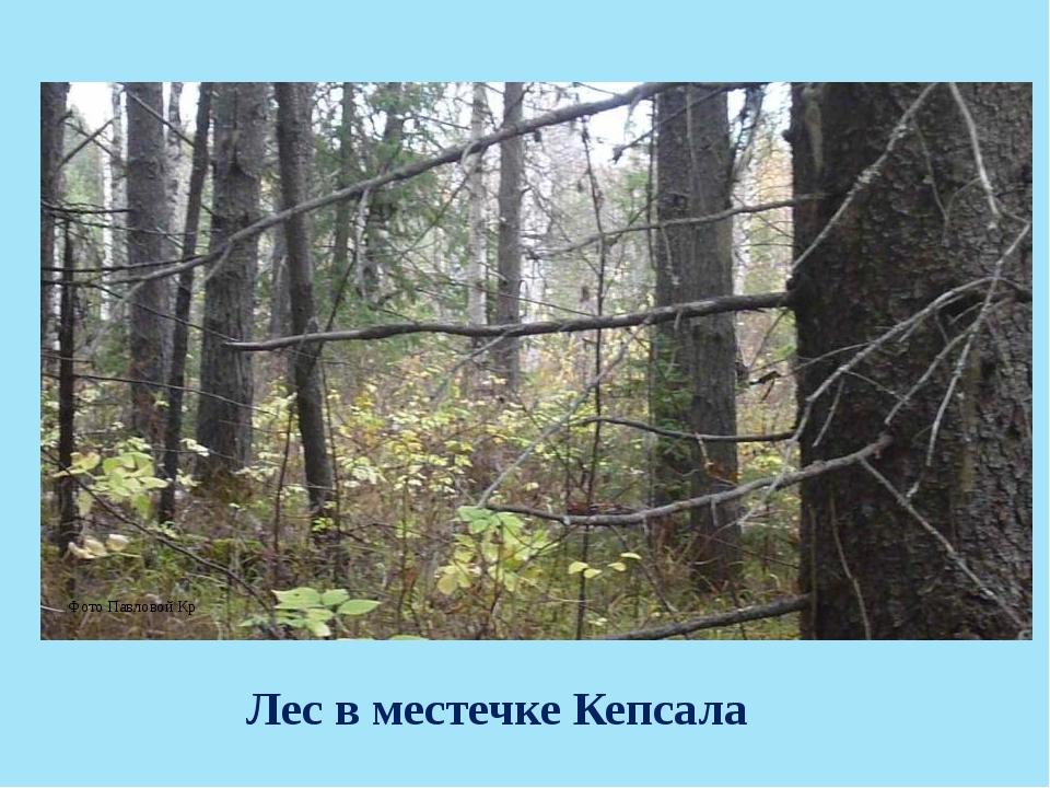Лес в местечке Кепсала Фото Павловой Кр