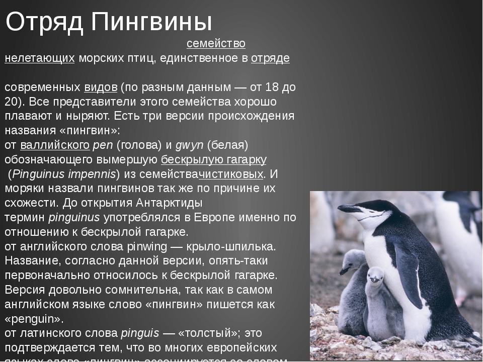 Отряд Пингвины Пингви́новыеилипингви́ны—семействонелетающихморских пти...