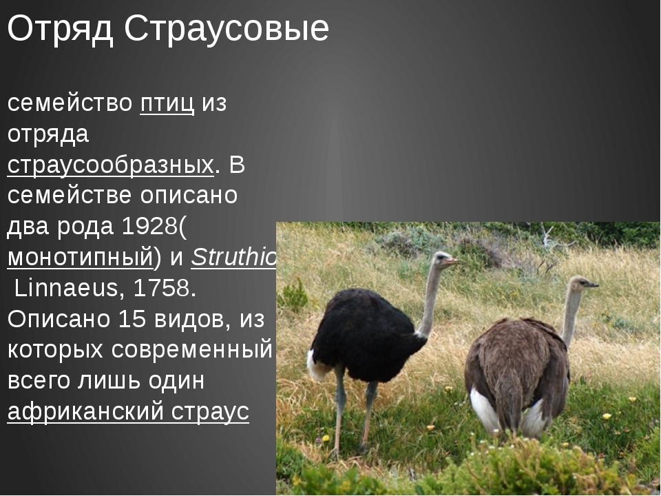 Отряд Страусовые Стра́усовые — семействоптициз отряда страусообразных. В с...