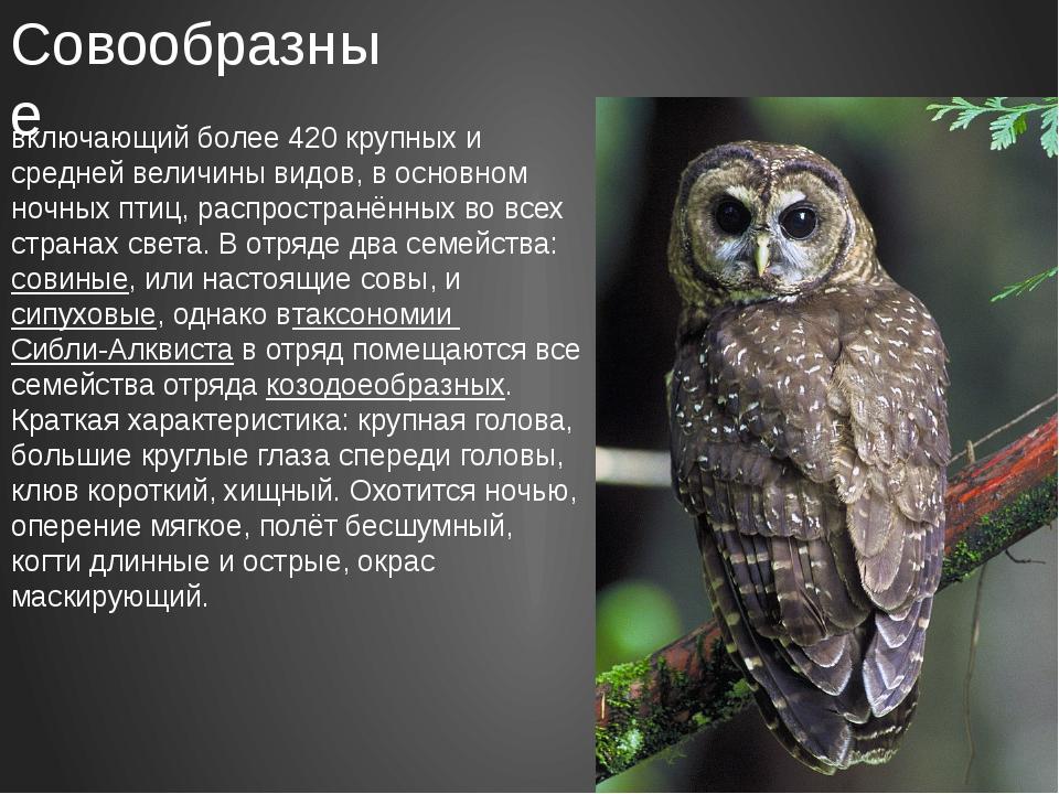 Совообразные Совообра́зные— отряд хищных птиц, включающий более 420 крупных...