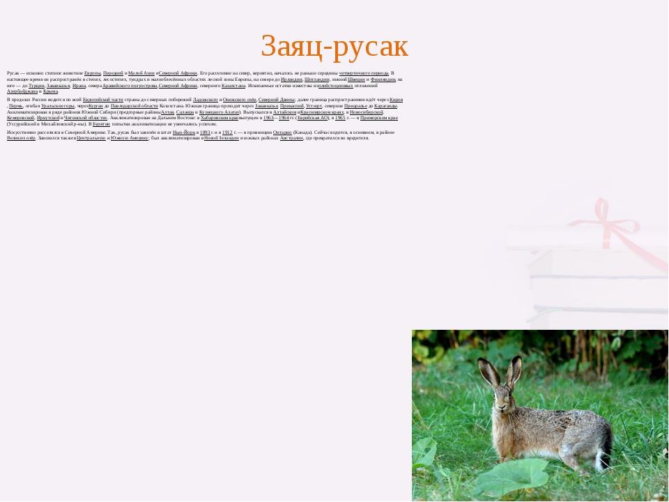 Заяц-русак Русак— исконно степное животноеЕвропы,ПереднейиМалой АзиииСе...