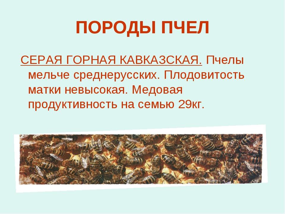 ПОРОДЫ ПЧЕЛ СЕРАЯ ГОРНАЯ КАВКАЗСКАЯ. Пчелы мельче среднерусских. Плодовитость...