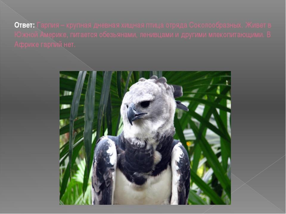 Ответ: Гарпия – крупная дневная хищная птица отряда Соколообразных. Живет в...