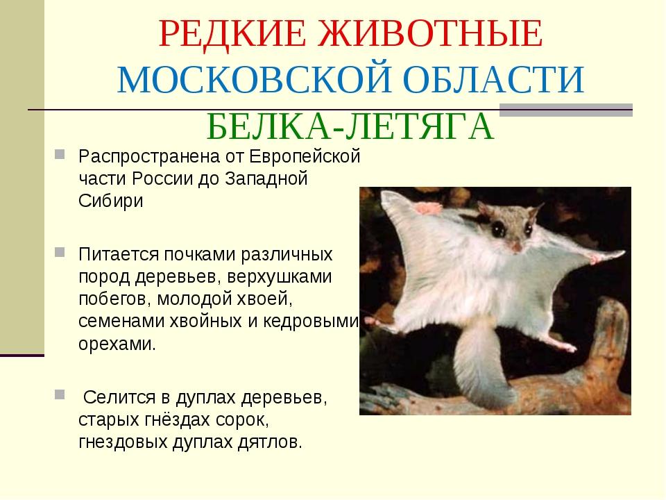 Красная книга московской области животные картинки