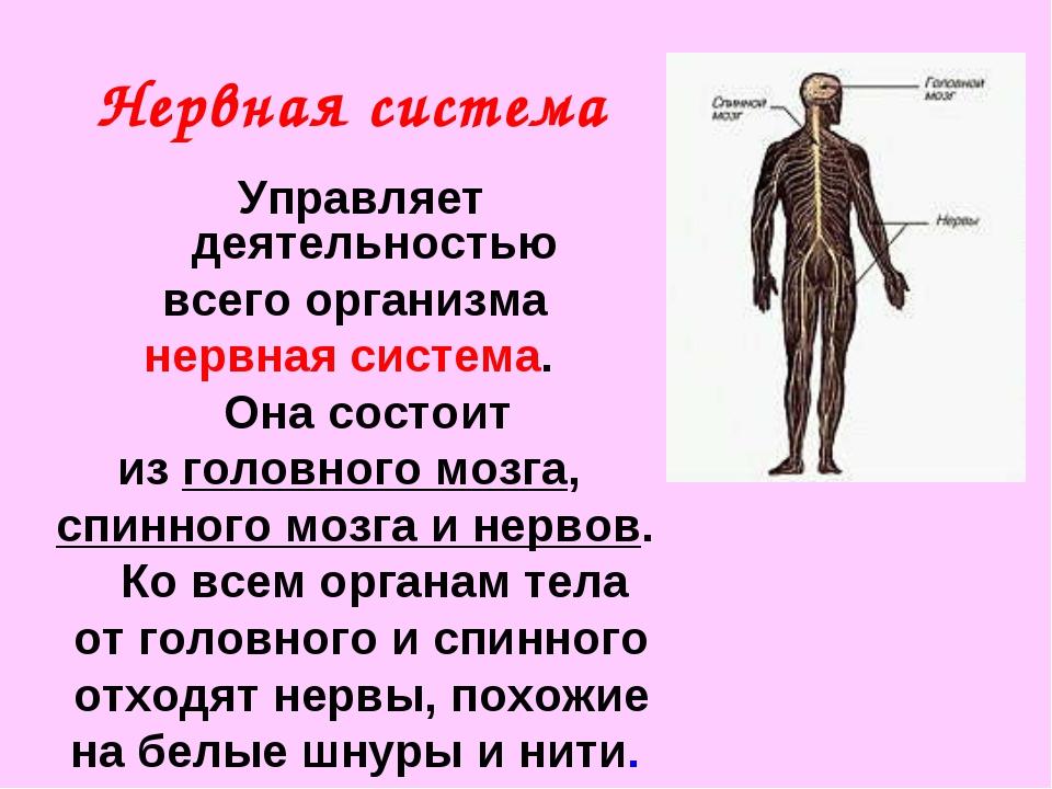 Нервная система Управляет деятельностью всего организма нервная система. Она...