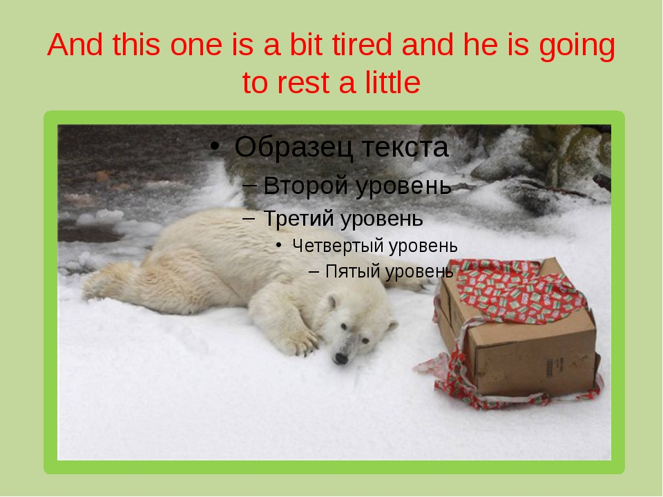 And this one is a bit tired and he is going to rest a little