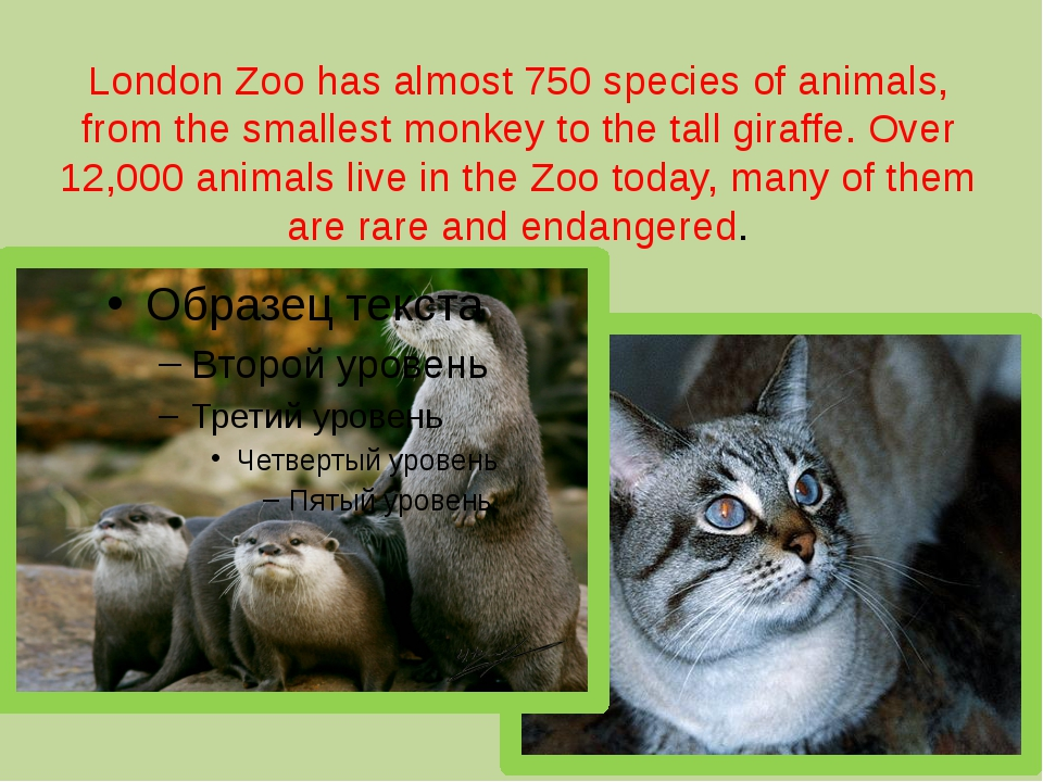 London Zoo has almost 750 species of animals, from the smallest monkey to the...