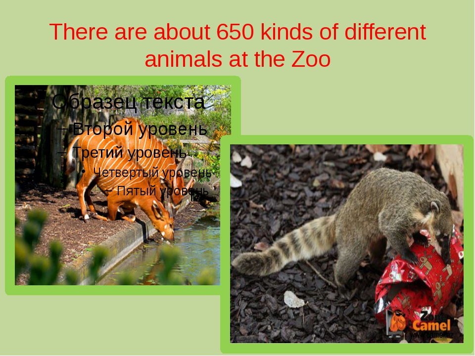 There are about 650 kinds of different animals at the Zoo