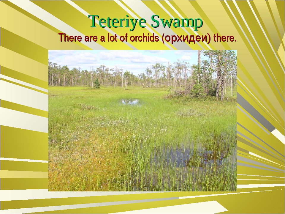 Teteriye Swamp There are a lot of orchids (орхидеи) there.