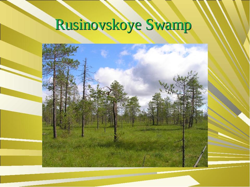 Rusinovskoye Swamp