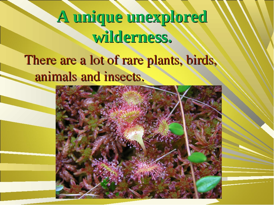 A unique unexplored wilderness. There are a lot of rare plants, birds, animal...
