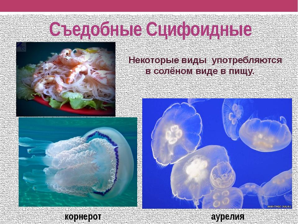 Съедобные Сцифоидные Некоторые виды употребляются в солёном виде в пищу. корн...