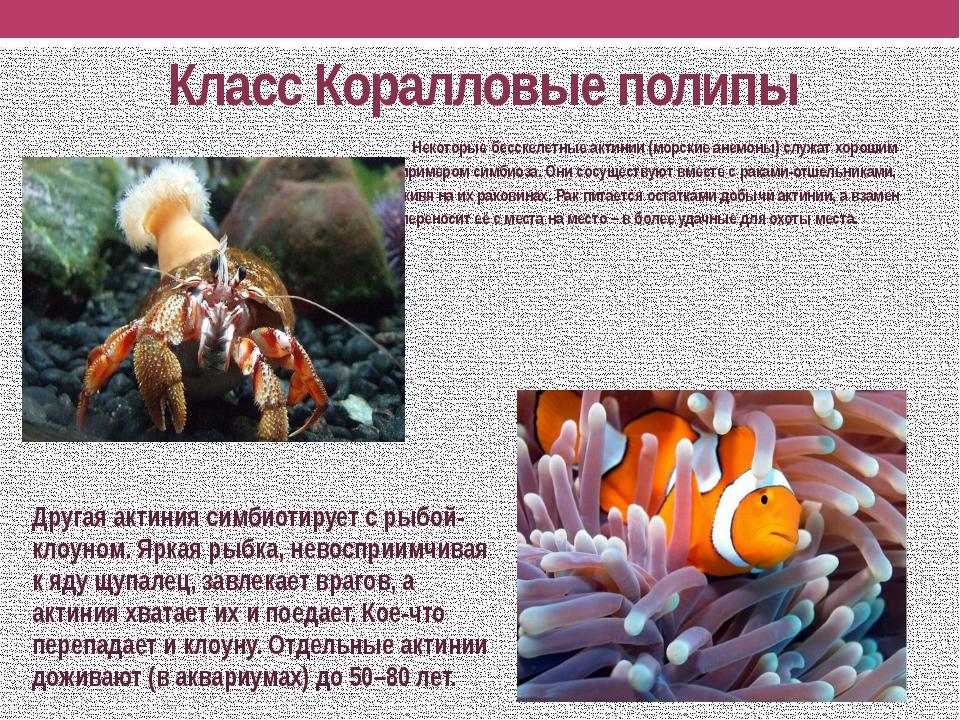 Класс Коралловые полипы Некоторые бесскелетныеактинии(морские анемоны) служ...