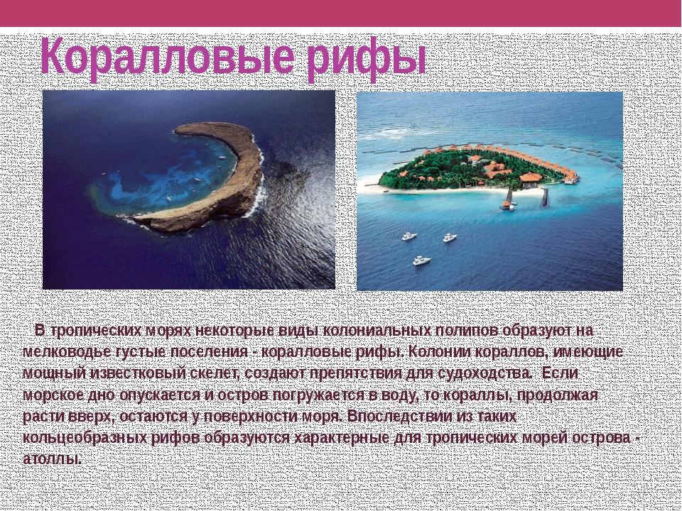Коралловые рифы В тропических морях некоторые виды колониальных полипов образ...