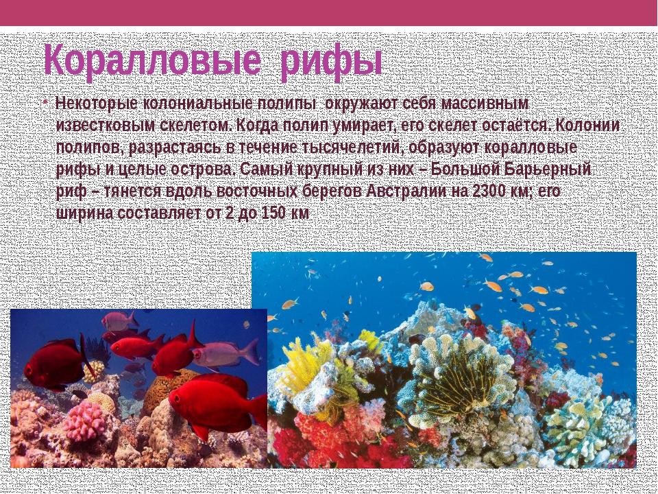 Коралловые рифы Некоторые колониальные полипы окружают себя массивным известк...