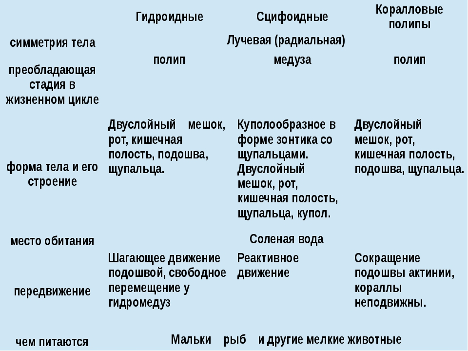 Гидроидные Сцифоидные Коралловые полипы симметрия тела Лучевая (радиальная)...